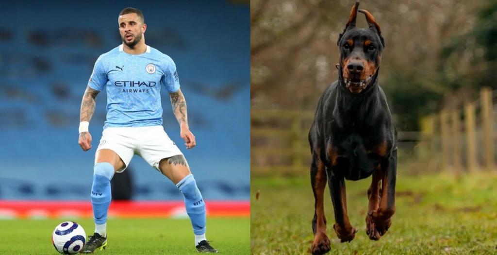Walker cane da guardia