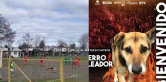 cane segna di testa Cile